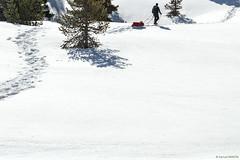 Traces dans la neige (Samuel Raison) Tags: hautsplateauxduvercors vercors pulka neige snow traces randonnée raquettes hiver winter blanc white montagne mountain nikond4s nikon282470mmafsg