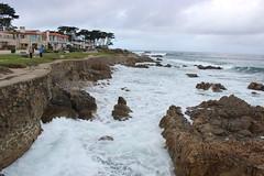 IMG_9784 (mudsharkalex) Tags: california pacificgrove pacificgroveca