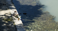 [ Sawyer sul Lungotevere - Sawyer on the Tiber waterfront ] DSC_0466.R2.jinkoll (jinkoll) Tags: boy man guy river fishing fish water beer bottle dirt trash crutches rod wood shadows shade shore bank edge sunny laying tiber tevere roma rome