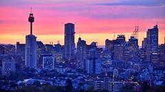 Die Skyline von Sydney im Abendlicht (Sanseira) Tags: sydney australia australien skyline hochhäuser tower nachtaufnahme