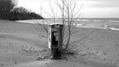 083 -1crpvibbwfwlcon (citatus) Tags: pay phone clothing optional nude beach hanlans point toronto islands canada spring morning 2019 pentax k3 ii bell