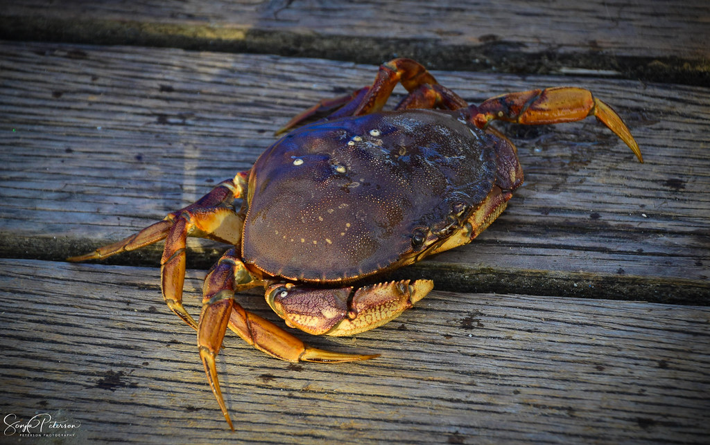 The World's most recently posted photos of crab and fishing