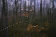 Dubbelexponering (Katarina Holmstrom) Tags: skog höst dubbelexponering
