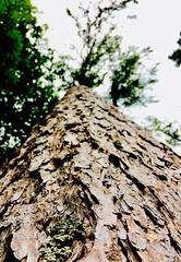 De Boom (mayderblite) Tags: closeup nature bark trunk tree