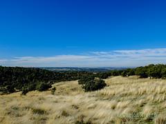 Hierbas y encinas. (Airbeluga) Tags: paisajes segovia nature naturaleza delarisca castillaleón senderismo españa sendcerrocaloco