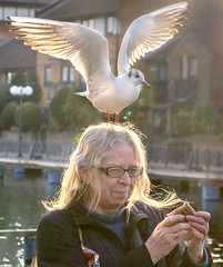 Now Where Did That Gull Go!! (adrians_art) Tags: women female birds blackheadedgulls wings flight humour funny comical amusing nature feathers people wildlife portrait smike laugh