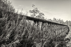 nowa-nowa-3587-ps-w (pw-pix) Tags: bridge trestlebridge historic historictrestlebridge timbertrestlebridge largestofitstypeinvictoria 276mlongand19mhigh big tall long decay decayed dilapidated weathered trees bushes shrubs forest sky clouds bw blackandwhite monochrome toned stonycreektrestlebridge orbostline colquhuonstateforest stonycreekvalley nowanowa eastgippsland gippsland victoria australia peterwilliams pwpix wwwpwpixstudio pwpixstudio