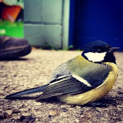 #bluetit #bird #mate20pro #mate20prophoto #mate20pro_camera #Huaweimate20Pro #huaweiphoto #huawei_pic #huaweishot #huaweiphotographers #huawei #bokeh #shot #macro #photography (kadafione1234) Tags: mate20procamera huaweipic huaweiphotographers mate20prophoto huawei mate20pro bird huaweishot bluetit huaweiphoto huaweimate20pro