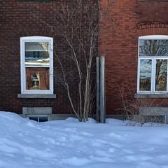 Projections gratuites en toutes saisons... (woltarise) Tags: streetwise hipstamatic iphone7 soleil glace neige appartements murs briques vitres fenêtres reflets montréal quartier outremont
