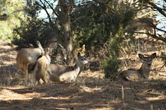 Deer Meet And Greet (randall321321) Tags: deer d7500 nature