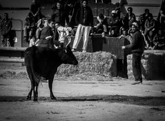 Bull-running, Aigues-Mortes (bobbex) Tags: camargue france southoffrance lesud bull festival french frenchculture blackwhite blackandwhite bw mono