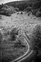Road to the summer (yuriye) Tags: yuryelysee yuriye grass field nature forest gray black blackandwhite road perspective summer horisont russia дорога луг лето природа поле деревья лес родина path
