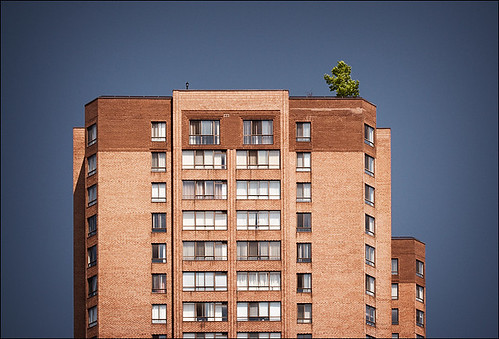single-tree_brick-building_01_8779643686_o
