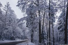 Z19_4607 LT (Zoran Babich) Tags: winter medvednica sljeme mountain zagreb croatia snow lanscape forest