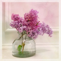 Lilacs (jeanne.marie.) Tags: bubbleglass vase onthemantle lilac lavender purple textured iphone7plus iphoneography smellssonice spring springtime flowers gardenflowers cutflowers lilacs