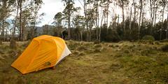 pelion-hut-campsite-the-overland-track_32266328012_o