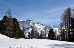 Passeggiata sulla neve (giorgiorodano46) Tags: marzo2019 march 2019 giorgiorodano solda sulden altoadige sudtirolo italy inverno winter hiver neve snow