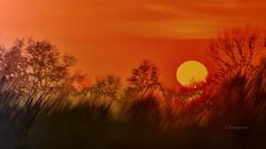 Verunglückter Sonnenuntergang (petra.foto busy busy busy) Tags: sonnenuntergang germany schleswigholstein bäume landschaft art gemälde fotopetra