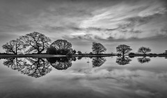 Who's throwing stones? (Mark MacFeeters) Tags: pond blackandwhite clouds reflection newforest hampshire dawn monochrome 7dmkll canon