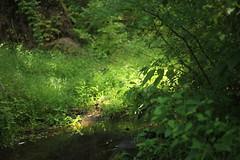 wetland lesson