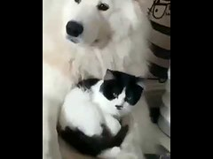Cat and Dog are Bestfriend - Cute Cat Dog Moment (tipiboogor1984) Tags: aww cute cat funny dog youtube