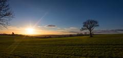 Silence is golden (Phil-Gregory) Tags: nikon d7200 tokina1120mmatx tokina tree sunrise sunburst peakdistrictderbyshire peakdistrict green holmesfield 1120mmproatx11 1120mm scenicsnotjustlandscapes landscapes landscapephotography