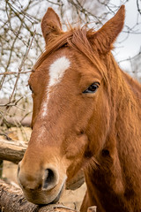 Horse (bransch.photography) Tags: mane equine portrait color rural cute closeup outdoors germany outdoor beauty brown noistrils nature animal mare countryside lakeammersee head fur beautiful looking mammal fauna equestrian ear farm eye horse equus bavaria adorable colour lovable sweet