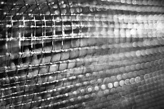 The Best Defense (belleshaw) Tags: blackandwhite sandiegobotanicgarden mesh obsession plastic netting protection seedlings garden grid detail texture abstract