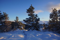 Sunlight Snow and Trees (steve_whitmarsh) Tags: aberdeenshire scotland scottishhighlands highlands craigendarroch winter snow mountain hills trees forest cairngorms topic abigfave