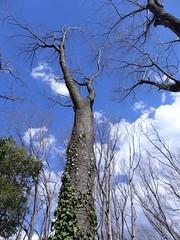 19o2881 (kimagurenote) Tags: tree sky 東高根森林公園 higashitakane forest park 川崎市宮前区 miyamaekawasaki
