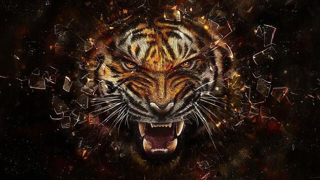 Обои тигр, стекло, осколки, агрессия, оскал картинки на рабочий стол, фото скачать бесплатно