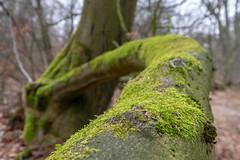 Reinhardswald/Urwald (Sabine Kierstead) Tags: landscape landschaft reinhardswald urwald fuji fujix holz moos travel natur nature naturephotography hessen