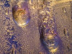 frost-1670304 (claudiaulrikegoodall) Tags: purple