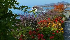 SWITZERLAND - Montreux on the shore of Leman lake (Jacques Rollet (Little Available)) Tags: bateau fleur flower landscape lac lake leman léman suisse boat switzerland rivage plantation arbre tree