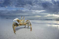 Horned Ghost Crab (Daniel Trim) Tags: horned ghost crab beach seychelles silhouette island nature wide angle ocypode ceratophthalmus