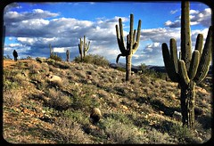 Passage To Solitude (MPnormaleye) Tags: texture solitary solitude cloudy stormy succulents utata saguaro desert
