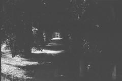 The dark footpath (photo 2) (Matthew Paul Argall) Tags: beirettevsn 35mmfilm blackandwhite blackandwhitefilm kentmere100 100isofilm footpath