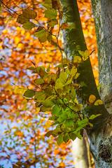 IMG_9764 (Tatjana_Schmid) Tags: spaziergang walk natur nature herbst autumn niederbayerm bayern bavaria