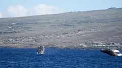 double_breach (Don Holmgren) Tags: hawaii kohalacoast humpbackwhales breach