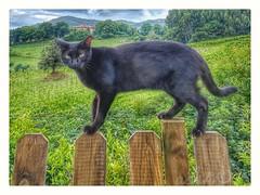 Beltzi (Asi75er) Tags: bakio topcat cat katua beltza katu gato euskalherria euskadi bizkaia nature naturaleza green verde caserio sky cielo