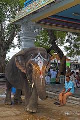 _MG_6208_DxO - Copy (carrolldeweese) Tags: ammamandapam bathing ghats cauvey tiruchirappall tamilnadu india