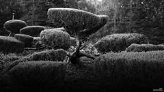 Une atmosphère zen (Un jour en France) Tags: canonef1635mmf28liiusm canoneos6dmarkii arbre arbrepaysagebrume zen jardin japonaise blancetnoirfrance blancetnoir atmosphère nuage nuageux sky