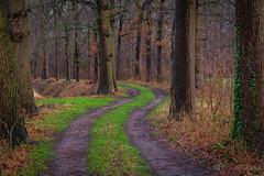 Curvy forestroad @ Twente