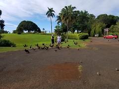 Chickens at Kukuiolono (jtbradford) Tags: kauai hawaii