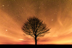 Sky on fire (Andy barclay) Tags: tree trees field country side landscape nature land horizon astro astrology astrophotography stars star space galaxy milkyway night cold nighttime winter dark sky nikon d7100 sigma 1020mm wide long exposure