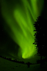 March Madness-122 (juan_guthrie) Tags: northernlights yellowknife nwt aurora