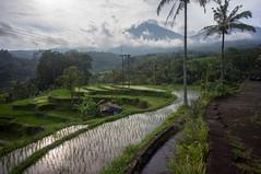 around Jatiluwih (kuuan) Tags: manualfocus mf voigtländer15mm cvf4515mm 15mm bali indonesia sonynex5n riceterace jatiliwuh tabanan view mountbatukaro reflection