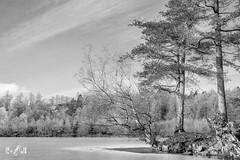 A partly frozen Tarn Hows, Lake District UK last January (Renate van den Boom) Tags: 01januari 2019 boom europa grootbrittannië ijs jaar lakedistrict landschap maand meer natuur renatevandenboom seizoenen stijltechniek weer winter zwartwit