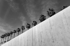 Los Angeles - 29/100 X (mfhiatt) Tags: dscf26730219jpg losangeles california blackandwhite urban workthescene 100xthe2019edition 100x2019 image29100