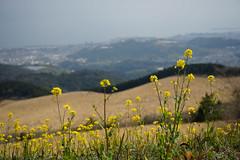 20190320a73_6228 (Gansan00) Tags: lce7m3 α7ⅲ sony japan 大分県 oita 日本 beepu 別府 landscape snaps ブラリ旅 03月 fe24105f4